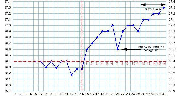 Максимальная температура у беременных на ранних сроках 25